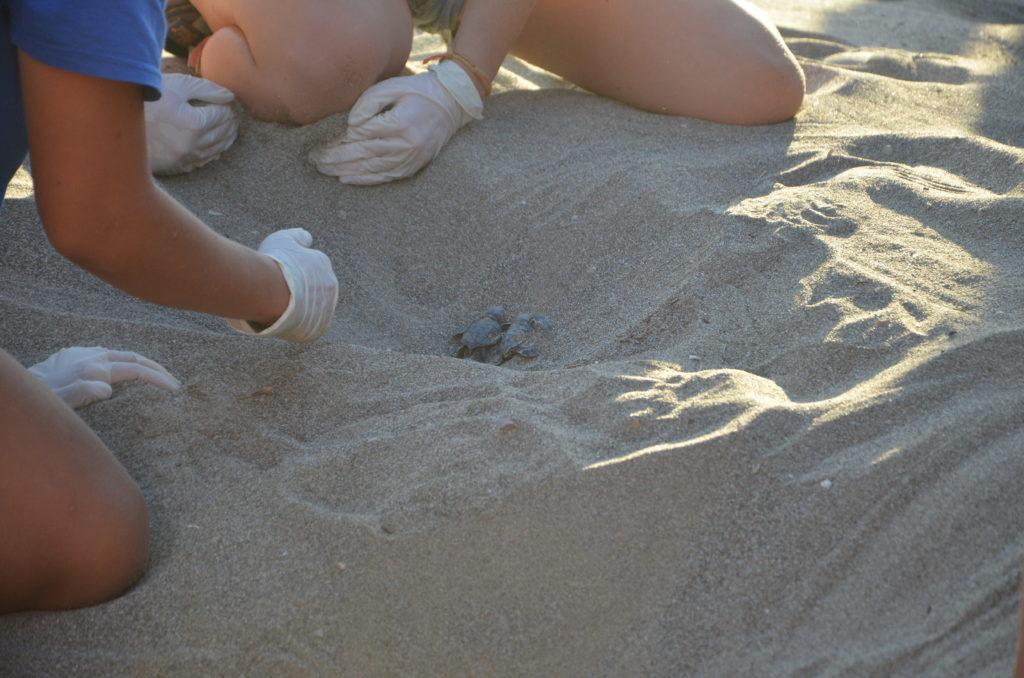 Baby-Meeresschildkröten