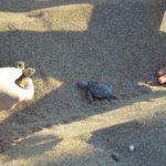 Meeresschildkrötenbabies auf Kreta beobachten – ein berührendes Erlebnis