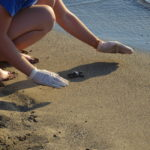 So verhältst du dich richtig, wenn du Meeresschildkrötenbabies am Strand begegnest